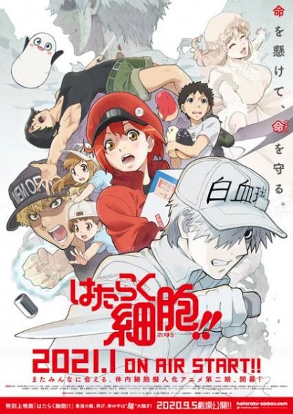 Hataraku Saibou 2nd Season, Cells at Work! 2nd Season,  はたらく細胞