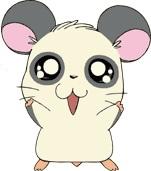 Panda-kun