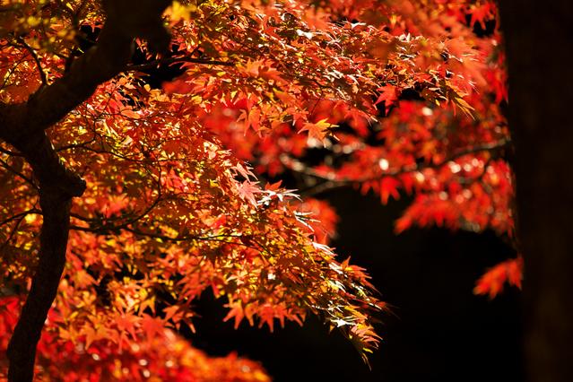 Autumn Japanese Foods Kouyou