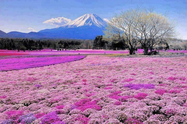 Mt. Fuji anime in real life in Japan