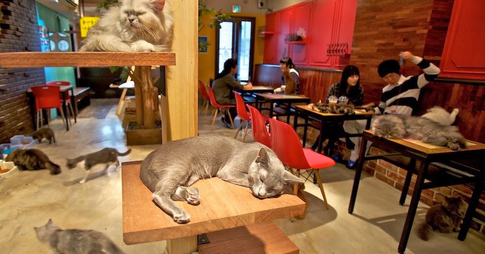 Nekorobi cat cafe nekomimi anime cat girl