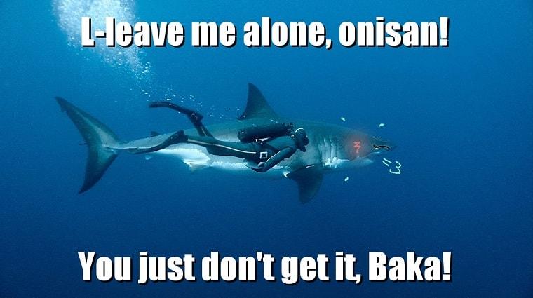 shark tsundere meme